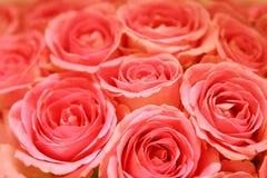Fondo rosado de las rosas Fotografía de archivo