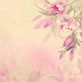 Fondo rosado de los lirios Fotos de archivo libres de regalías