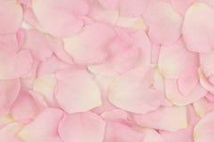 Fondo rosado de los pétalos de la flor Fotografía de archivo libre de regalías