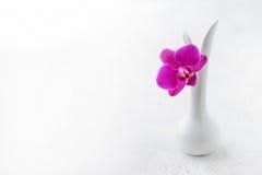 Fondo rosado del blanco de la orquídea Fotos de archivo libres de regalías
