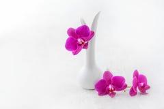 Fondo rosado del blanco de la orquídea Foto de archivo libre de regalías