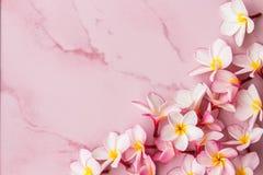 Fondo rosado del plumeria Imagen de archivo libre de regalías