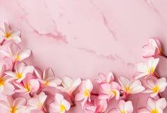 Fondo rosado del plumeria Fotografía de archivo