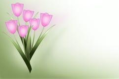 Fondo rosado del tulipán Fotografía de archivo