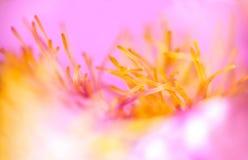 Fondo rosado floral abstracto Fotografía de archivo libre de regalías