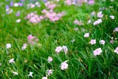 Fondo rosado hermoso de la falta de definición de la flor con el espacio de la copia imagen de archivo