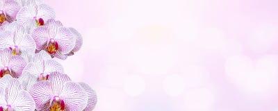 Fondo rosado hermoso de las orquídeas para el día del ` s de la tarjeta del día de San Valentín Imágenes de archivo libres de regalías
