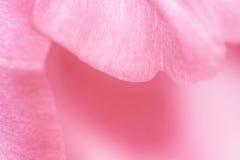 Fondo rosado soñador Fotografía de archivo libre de regalías