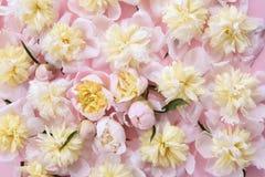 Fondo rosado y amarillo colorido de las flores Imagen de archivo libre de regalías
