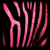 Fondo rosado y negro de la cebra imágenes de archivo libres de regalías
