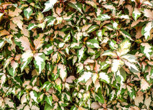 Fondo rosado y verde de la hoja Imagen de archivo