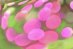 Fondo rosado y verde de la madreselva abstracta Foto de archivo