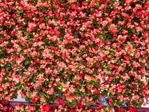 Fondo rosso del fiore Fotografia Stock