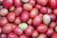Fondo rosso del pomodoro Fotografia Stock