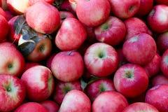 Fondo rosso della frutta delle mele delle patatine fritte di miele immagini stock libere da diritti