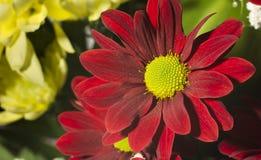 Fondo rosso di verde del fiore Fotografie Stock Libere da Diritti
