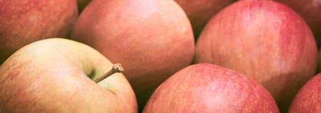 Fondo rosso dolce delle mele dell'insegna di web Immagini Stock Libere da Diritti
