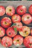 Fondo rosso maturo fresco dolce del raccolto della mela Immagine Stock
