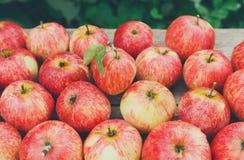 Fondo rosso maturo fresco dolce del raccolto della mela Fotografie Stock