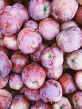 Fondo rosso scuro delle mele di bello autunno spartano Immagini Stock