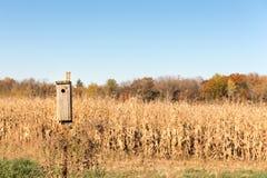 Fondo rurale con la Camera dell'uccello in priorità alta Fotografie Stock Libere da Diritti