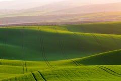 Fondo rurale di struttura di agricoltura della molla Colline delle onde verdi in Moravia del sud, repubblica Ceca durante il tram Immagini Stock