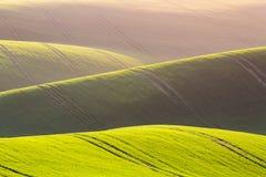 Fondo rurale di struttura di agricoltura della molla Colline delle onde verdi in Moravia del sud, repubblica Ceca durante il tram Fotografia Stock