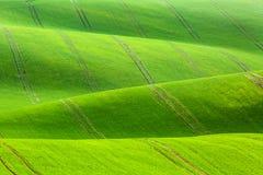 Fondo rurale di struttura di agricoltura della molla Colline delle onde verdi in Moravia del sud, repubblica Ceca Paesaggio verde Immagini Stock Libere da Diritti