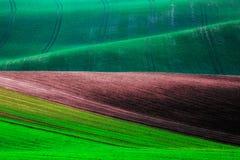 Fondo rurale di struttura di agricoltura della molla Colline verdi e marroni delle onde in Moravia del sud, repubblica Ceca Paesa Immagini Stock Libere da Diritti