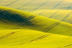 Fondo rurale di struttura di agricoltura della molla Il campo giallo della violenza ondeggia le colline in Moravia del sud, repub Fotografie Stock