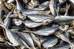 Fondo salato dei pesci Fotografia Stock
