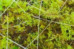 Fondo salvaje abstracto de la hierba del bosque E fotografía de archivo