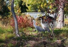 Fondo salvaje de la naturaleza de Wisconsin Fotografía de archivo libre de regalías