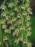 Fondo salvaje de la orquídea Fotografía de archivo