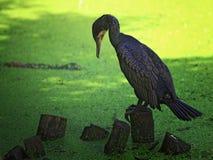 Fondo salvaje del pájaro Fotografía de archivo