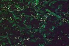 Fondo sbiadito profondo delle foglie verdi Disposizione creativa fotografie stock libere da diritti