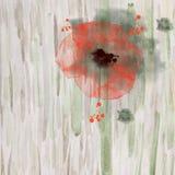 Fondo scenico dell'acquerello con un papavero rosso illustrazione vettoriale