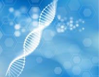 Fondo scientifico di vettore del filo del DNA Fotografia Stock
