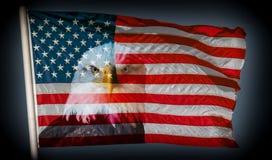 Fondo scuro dell'aquila calva e della bandiera americana sempre vigilante fotografia stock