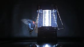 Fondo scuro della farfalla di plastica della lampada nessuno metraggio del hd archivi video