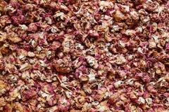 fondo secado de las rosas Fotografía de archivo