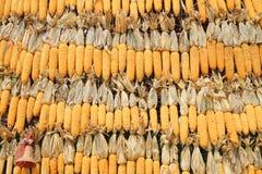 Fondo secado del maíz Fotos de archivo libres de regalías
