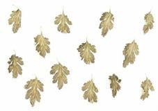 Fondo secco del modello delle foglie Immagine Stock Libera da Diritti