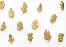 Fondo secco del modello delle foglie Fotografia Stock