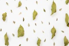 Fondo secco del modello delle foglie Immagini Stock