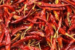 Fondo secco del peperoncino rosso Fotografie Stock
