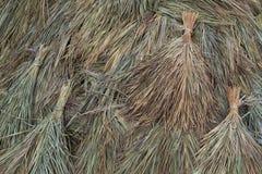 Fondo secco della canna da zucchero Fotografia Stock