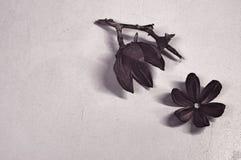 Fondo seco de la flor Imagenes de archivo