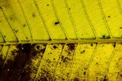 Fondo seco de la textura de la hoja Fotografía de archivo libre de regalías
