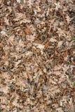 Fondo seco de las hojas de otoño Foto de archivo libre de regalías